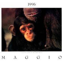 Calendario 1996.Panda Photo Calendario 1996