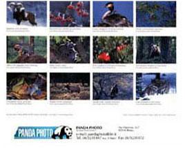1998 Calendario.Panda Photo Calendario 1998