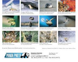 Calendario 2001.Panda Photo Calendario 2001